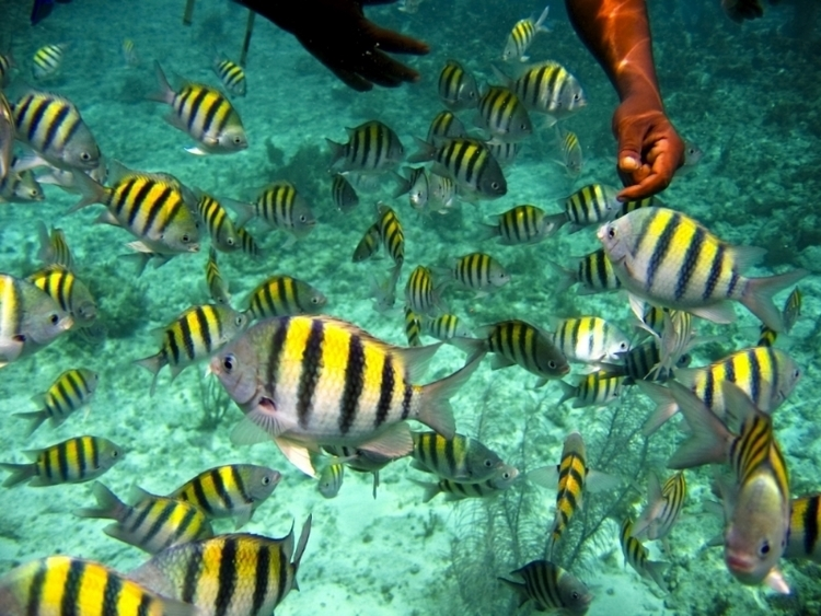 nassau bahamas excursions